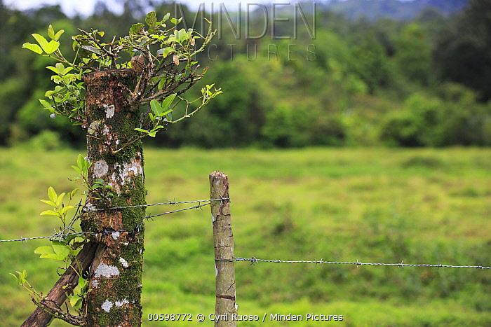 Living fence, Golfito, Costa Rica