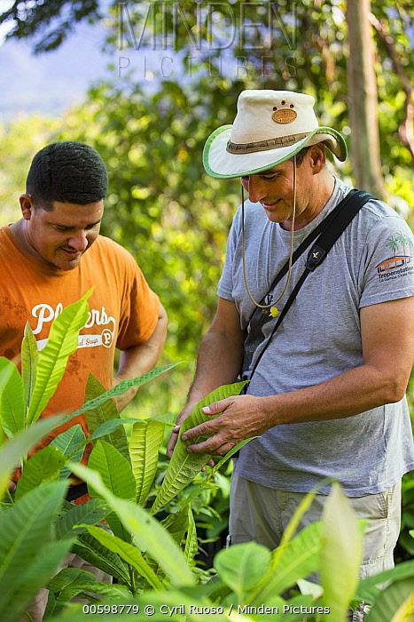 Botanist, Dr. Anton Weissenhofer, at tree nursery used in tropical rainforest regeneration, Golfito, Costa Rica