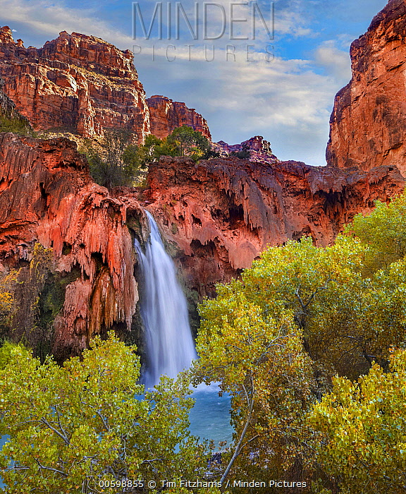 Havasu Creek which is lined with Cottonwood trees, being fed by one of its three cascades, Havasu Falls, Grand Canyon, Arizona