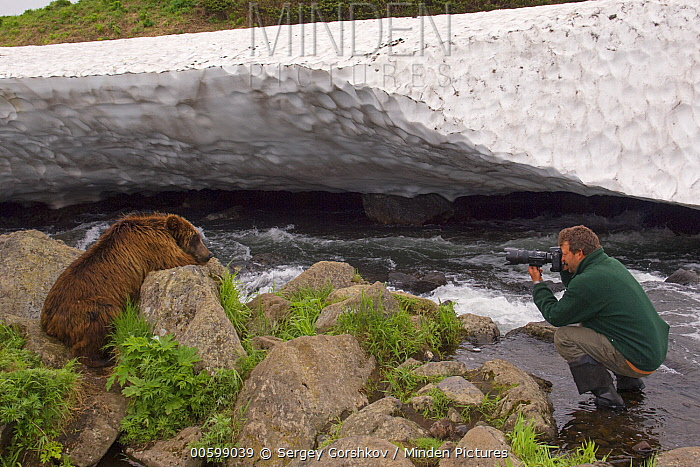 Brown Bear (Ursus arctos) with photographer Sergey Gorshkov, Kamchatka, Russia