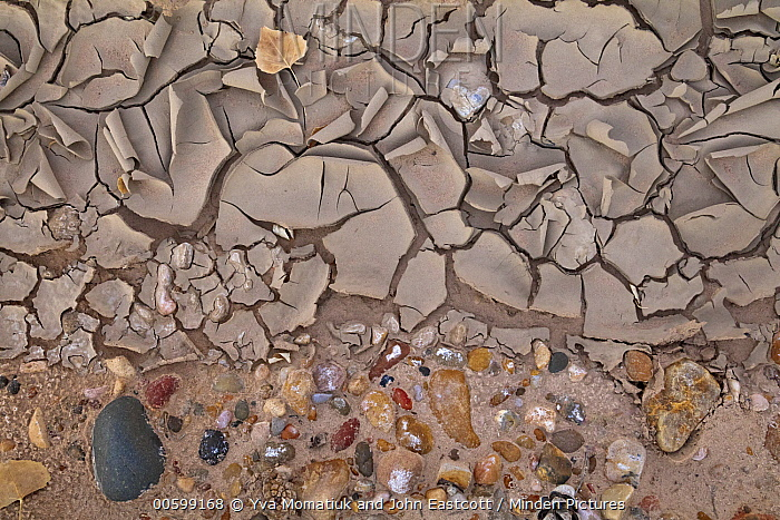 Cracked mud and pebbles in desert, Grand Staircase-Escalante National Monument, Utah