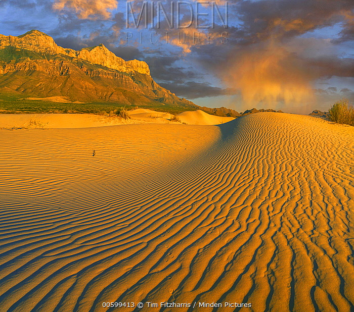 Sand dunes, Gypsum Dunes, Guadalupe Mountains National Park, Texas