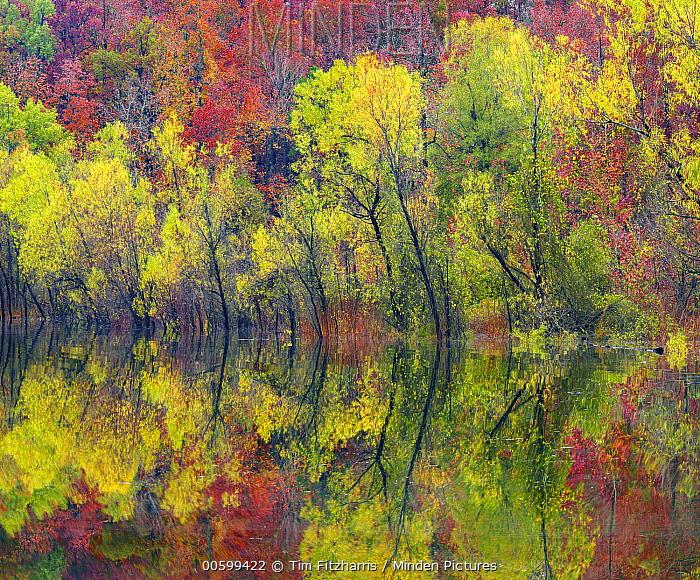 Deciduous forest along lake, Gillham Lake, Arkansas