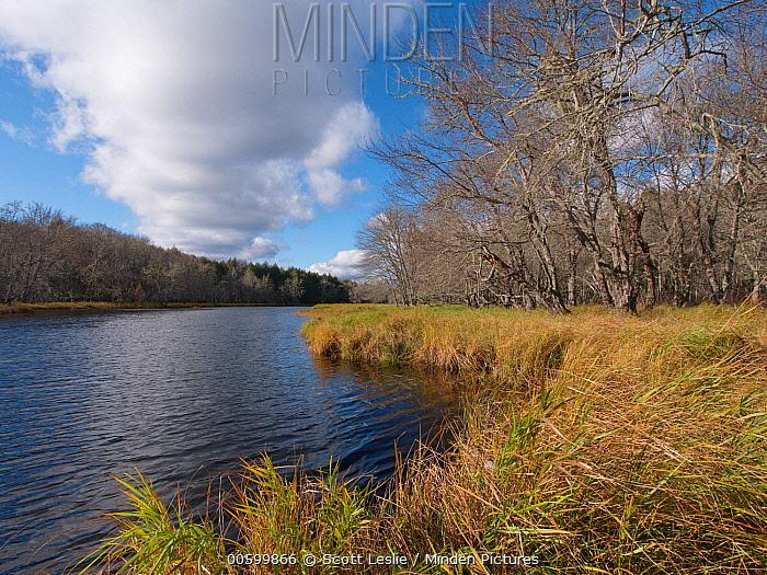 Red Maple (Acer rubrum) trees and floodplain in autumn, Kejimkujik National Park, Nova Scotia, Canada