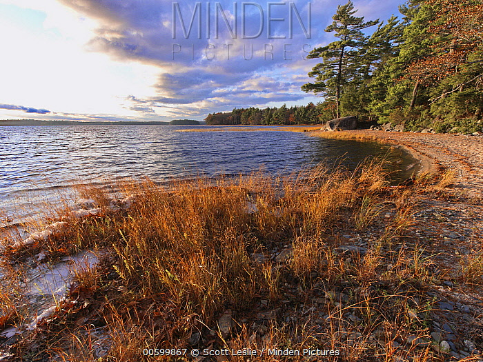 Shoreline of Kejimkujik Lake, Kejimkujik National Park, Nova Scotia, Canada