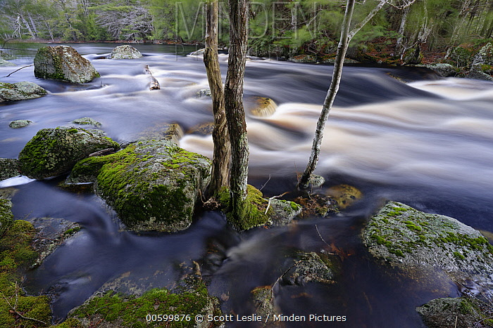Red Maple (Acer rubrum) trees and river, Mersey River, Medway Lakes Wilderness Area, Nova Scotia, Canada