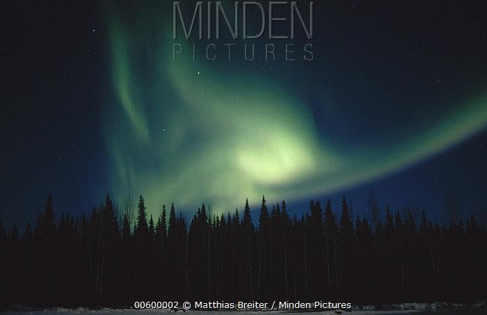Aurora borealis over spruce forest, Chena Hot Springs, Alaska  -  Matthias Breiter