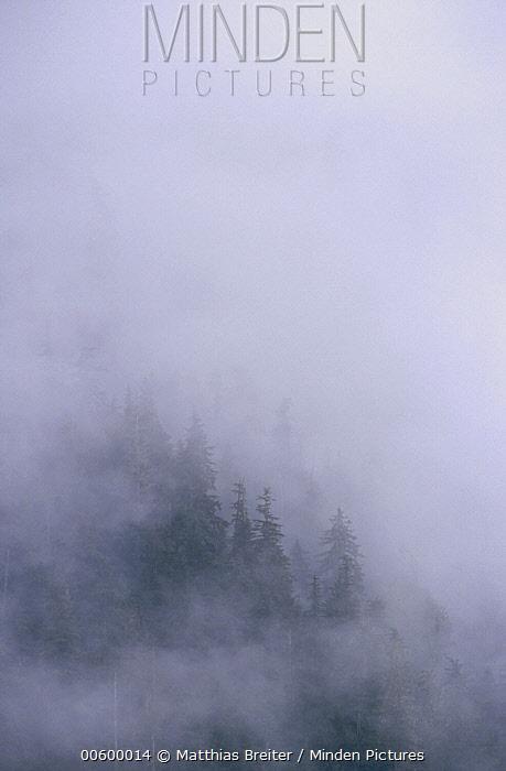 Coastal temperate rainforest in clouds, Anan Creek, Alaska  -  Matthias Breiter