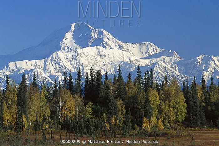 Mt. McKinley towering above forest in autumn, Petersville Road, Denali National Park and Preserve, Alaska  -  Matthias Breiter