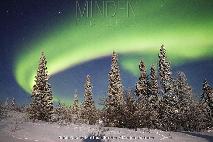 Northern lights or aurora borealis over boreal forest, North America  -  Matthias Breiter