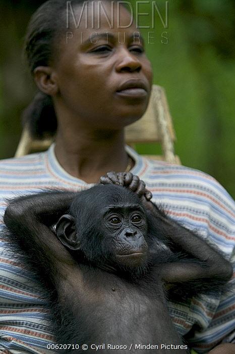 Bonobo (Pan paniscus) orphan baby with adoptive mother, Sanctuary Lola Ya Bonobo Chimpanzee, Democratic Republic of the Congo  -  Cyril Ruoso