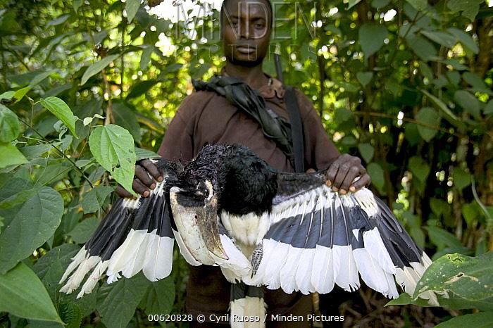 Bush meat hunter with kill, Boje Village, Cross River State, Nigeria  -  Cyril Ruoso