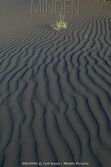 Ripples in desert sand, central Iceland  -  Cyril Ruoso