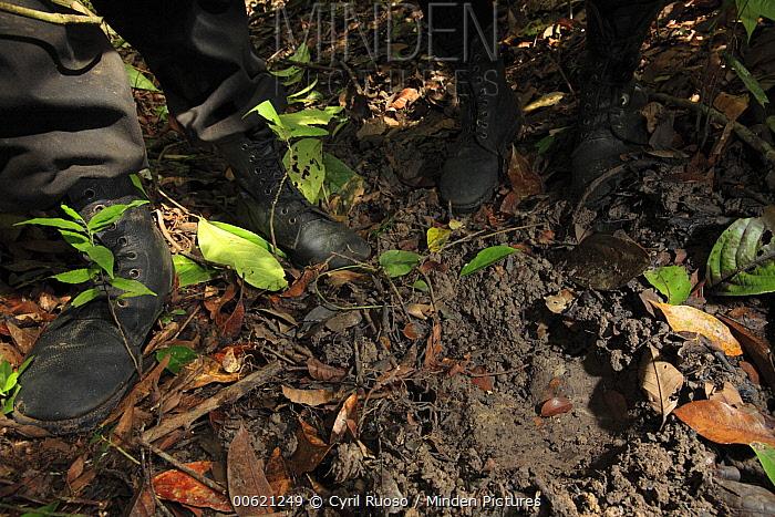 Sumatran Rhinoceros (Dicerorhinus sumatrensis) track and anti-poaching team, Way Kambas National Park, Sumatra, Indonesia  -  Cyril Ruoso