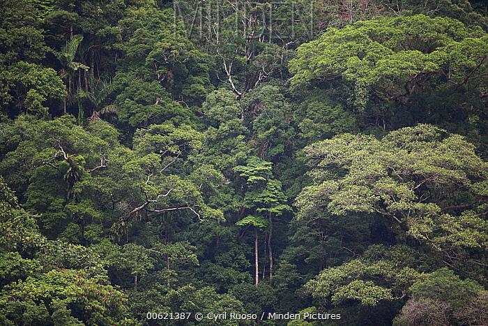 Tropical forest around Maninjau Lake, Sumatra, Indonesia  -  Cyril Ruoso