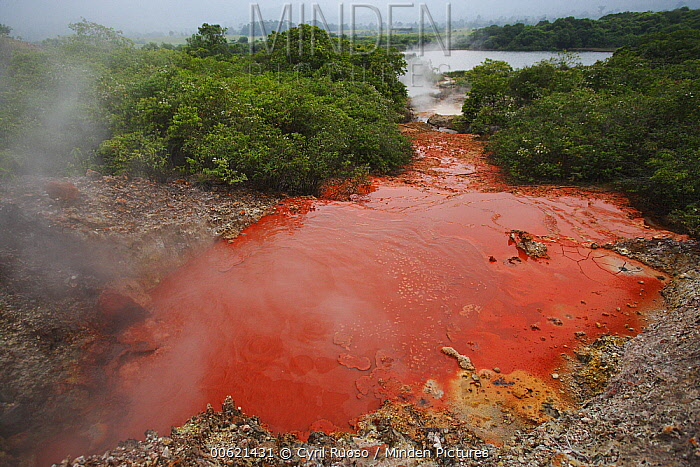 Iron water, Bukit Barisan Selatan National Park, Sumatra, Indonesia  -  Cyril Ruoso