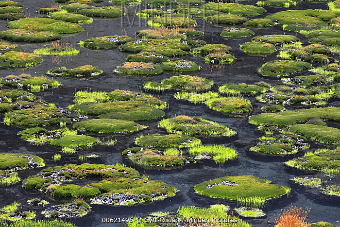 Wetland in the Altiplano, Cordillera Blanca Mountain Range, Andes, Peru  -  Cyril Ruoso