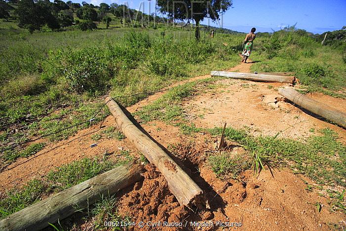 African Elephant (Loxodonta africana) ran down 4000 volt charged electric fence, Mwaluganje Elephant Sanctuary, Kenya  -  Cyril Ruoso