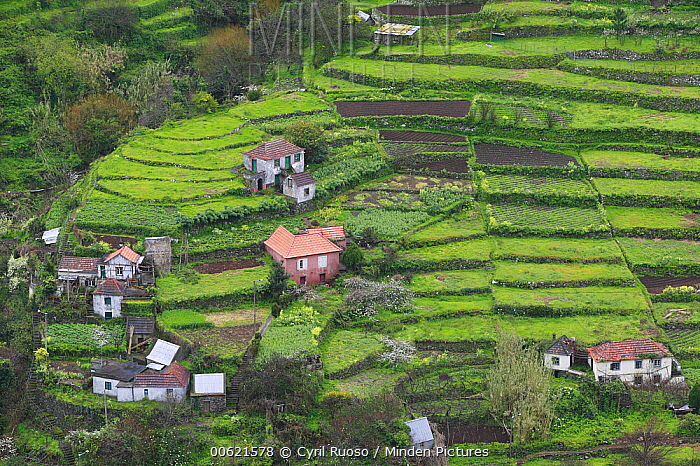 Hillside village and terraced fields, Madeira  -  Cyril Ruoso
