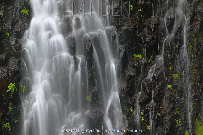 Risco Waterfall flowing over basalt, Rabacal, Madeira  -  Cyril Ruoso