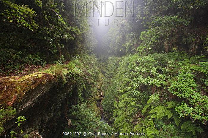Ravine in primary forest, Ribeira dos Cedros, Madeira  -  Cyril Ruoso