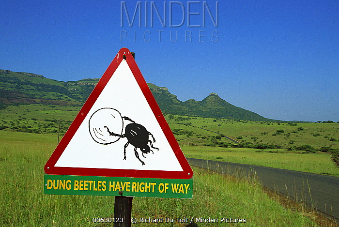 Dung Beetle (Scarabaeidae) road sign cautioning drivers that Dung Beetles have the right of way, Itala Game Reserve, South Africa  -  Richard Du Toit