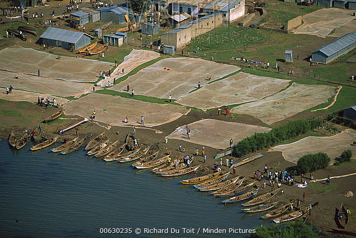 Fishing nets and boats, Karungo, Lake Victoria, Kenya