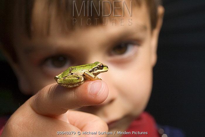 A three year old boy with a Pacific Treefrog (Pseudacris regilla)  -  Michael Durham
