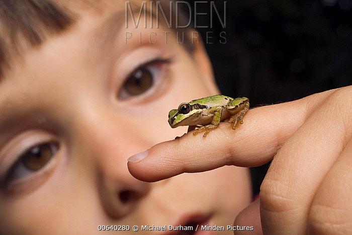 A three year old boy with a Pacific Tree Frog (Pseudacris regilla)  -  Michael Durham