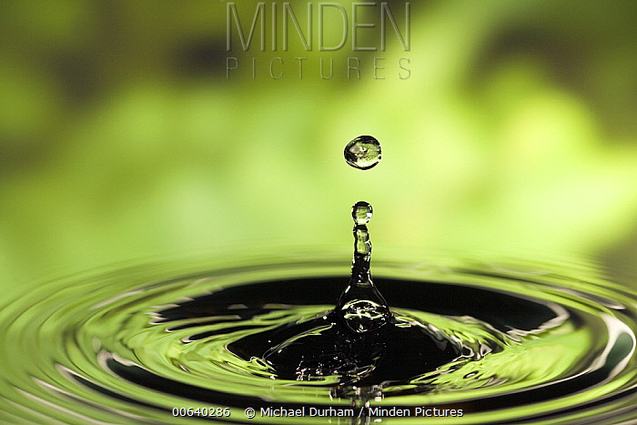 Ripples radiating out from drop of water splashing into calm pool  -  Michael Durham
