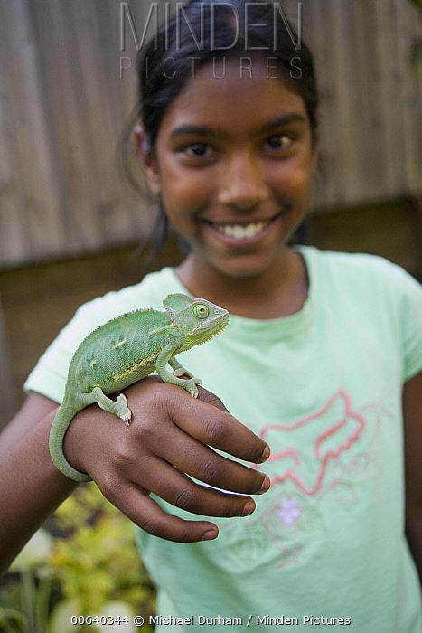 Veiled Chameleon (Chamaeleo calyptratus) juvenile female held by nine year old Lucy  -  Michael Durham