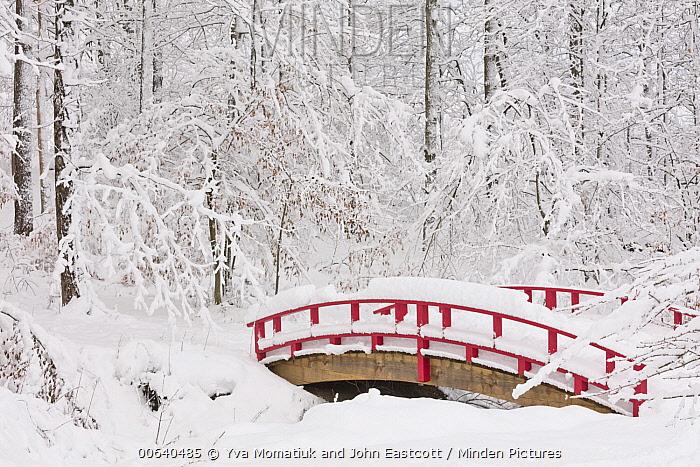 Bridge in forest in winter, Accord, New York