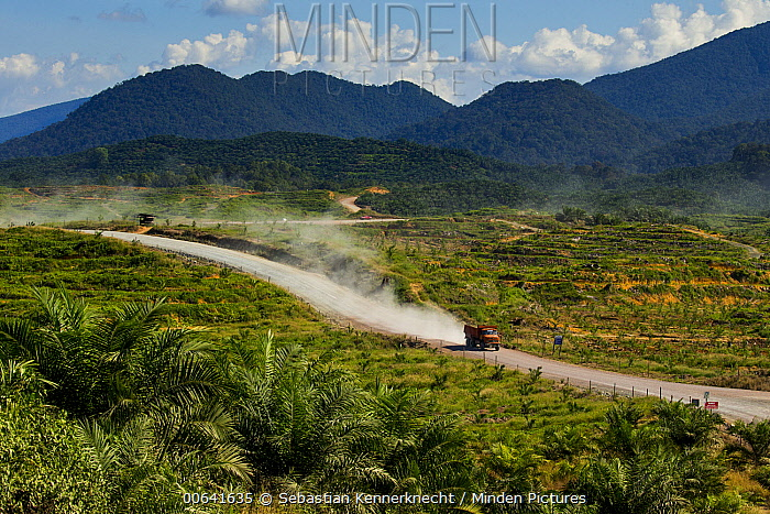 African Oil Palm (Elaeis guineensis) plantations and logging truck, Sabah, Borneo, Malaysia