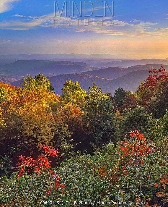 Deciduous forest in autumn, Blue Ridge Range, Blue Ridge Parkway, North Carolina