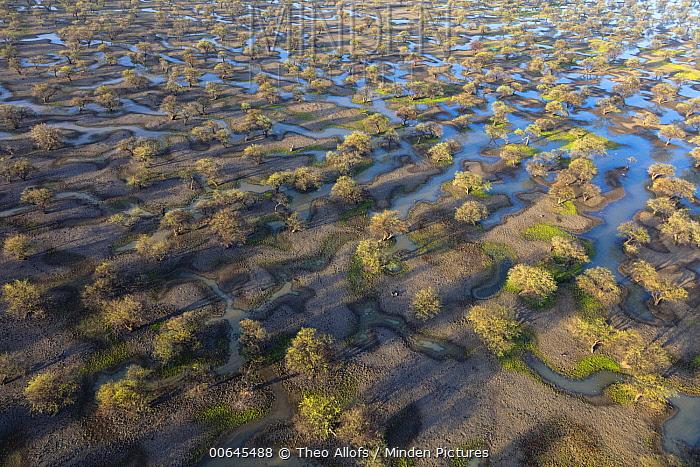 Swamp in desert, Sahara, Chad