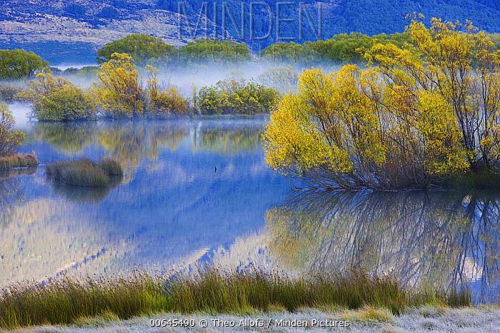 Wetland with morning fog, Glenorchy Lagoon, South Island, New Zealand