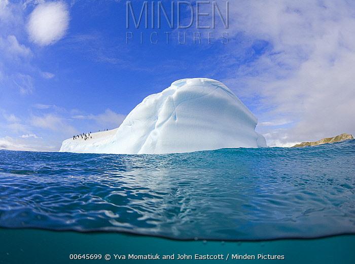 Chinstrap Penguin (Pygoscelis antarctica) group on iceberg, South Shetland Islands, Antarctica