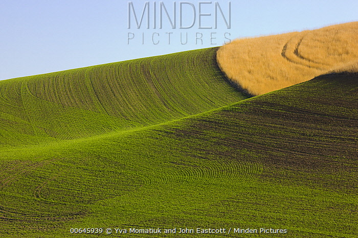 Freshly ploughed fields, Palouse Hills, Washington