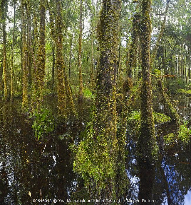 Lush wetland, Westland National Park, South Island, New Zealand