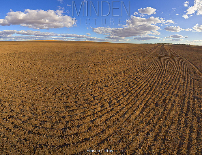 Freshly ploughed field, South Australia, Australia