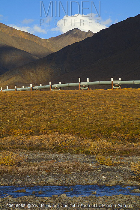 Alyeska oil pipline crossing tundra and mountains, Brooks Range, Dalton Highway, Alaska