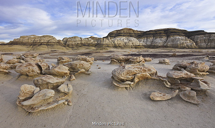 Eroded sandstone rock formations in desert, Bisti Wilderness Area, New Mexico