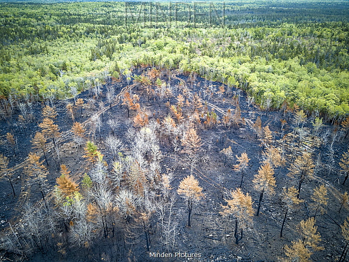 Burned industrial logging area, Nova Scotia, Canada