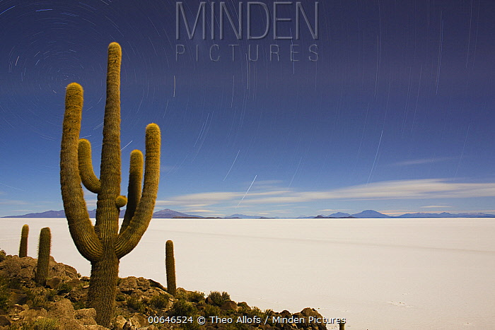 Trichocereus Poco (Echinopsis tarijensis) cacti in desert at night, Salar de Uyuni, Bolivia