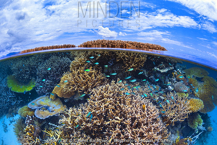 Coral reef with a variety of corals, Mayotte