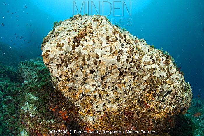 European Date Mussel (Lithophaga lithophaga) collectors have destroyed rock habitat, Punta Campanella Marine Protected Area, Sorrento Peninsula, Italy