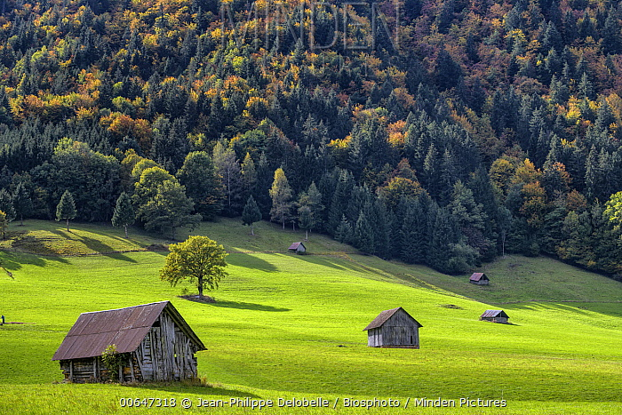 Huts for storing hay, typical fo the Chatelard region, Savoie, Alps, France