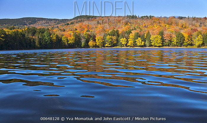 Deciduous forest and pond in autumn, Bald Mountain Pond, Maine