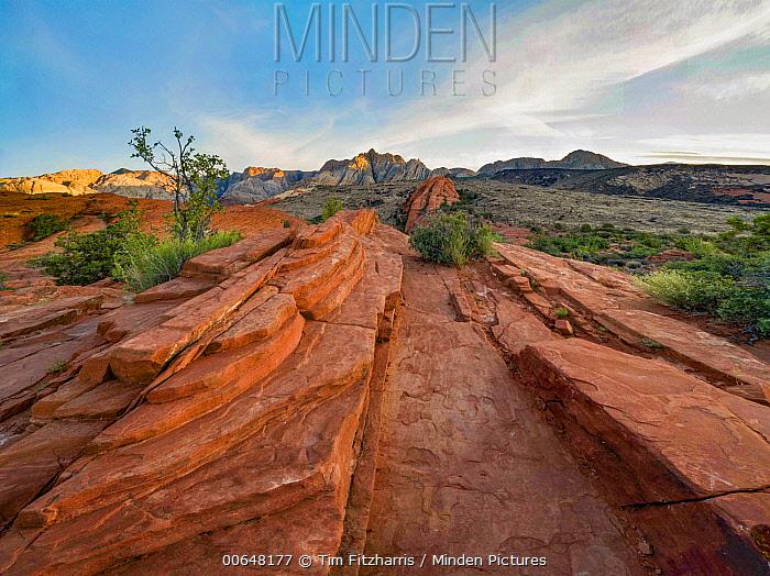 Sandstone, Petrified Dunes, White Rock Mountain, Snow Canyon State Park, Utah