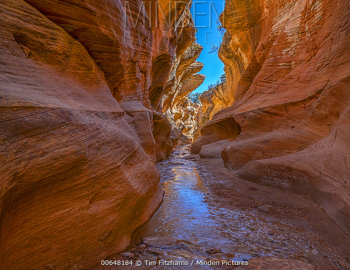 Slot canyon, Willis Creek Canyon, Grand Staircase-Escalante National Monument, Utah